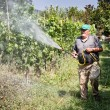 Stock Photo: Spraying pesticide in vineyard