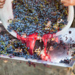 Making wine — Stock Photo