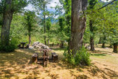 Picnic area in the forest — Stockfoto