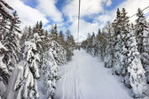 Snow on trees on ski slope, Italy — Stock Photo