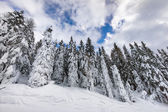 Mountain frozen forest — Stock Photo