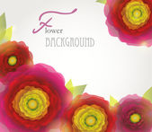 Colorful red-purple-yellow buttercup flowers background. — Vecteur