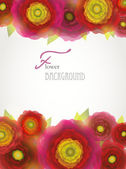 Colorful red-purple-yellow buttercup flowers background. — Vector de stock