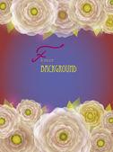 青紫色の背景に白ヴィンテージ キンポウゲの花. — ストックベクタ
