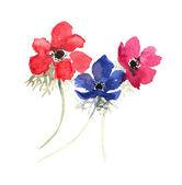 Three watercolor anemones. — 图库照片