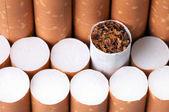 Tobak i cigaretter på nära håll — Stockfoto