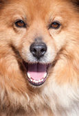 Portrait of a not purebred dog — Stock Photo