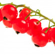 Red currant close up — Stok Fotoğraf #26506593