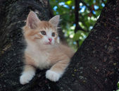Kitten sitting in a tree  — Stock Photo