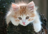 Kitten lying in a tree — Stock Photo