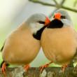 lindo par de pájaros — Foto de Stock