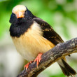 Black and Beige Bird — Stock Photo