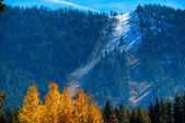 Trees on a mountain — Stock Photo