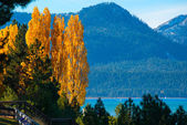 Trees at the lakeside — Stock Photo