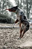 Dog playing on beach — Stock Photo