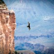 Bird flying over the grand canyon — Stock Photo