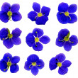 Stock Photo: Speedwell Flowers