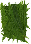 Deer Fern Texture — Stock Photo