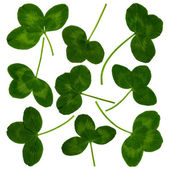 CloverLeaves — Stock Photo