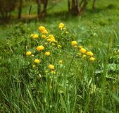 Globe_flowers.jpg — Stock fotografie