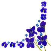 Blue Blossoms Corner White — Stock Photo