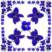Blue Blossoms — Stock Photo