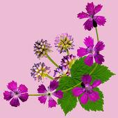 PurpleBlossomsCornerPink — Stock Photo