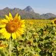 Sunflower with blue sky — Stock Photo #18561795