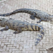 Two crocodile - Foto Stock