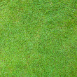 Beautiful green grass texture from golf course — Stock Photo