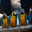 Colorful Macaw — Stock Photo #19688863