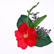 Artificial hibiscus, Chinese Rose on White Background — Stock Photo