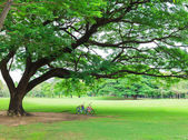 Bicycle in a park — Stock Photo