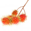 Rambutan fruit isolated on white background — Stock Photo