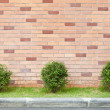Stock Photo: Tree in pot with brick wall background