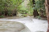 フォレスト内の滝 — ストック写真