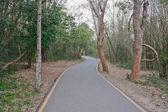 дорога в лесу — Стоковое фото