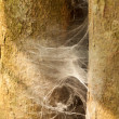 Stock Photo: Abandon spider web on tree