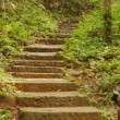 Stone stairs in a forest — Stock Photo