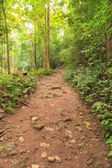 Walk path in the forest — Stock Photo