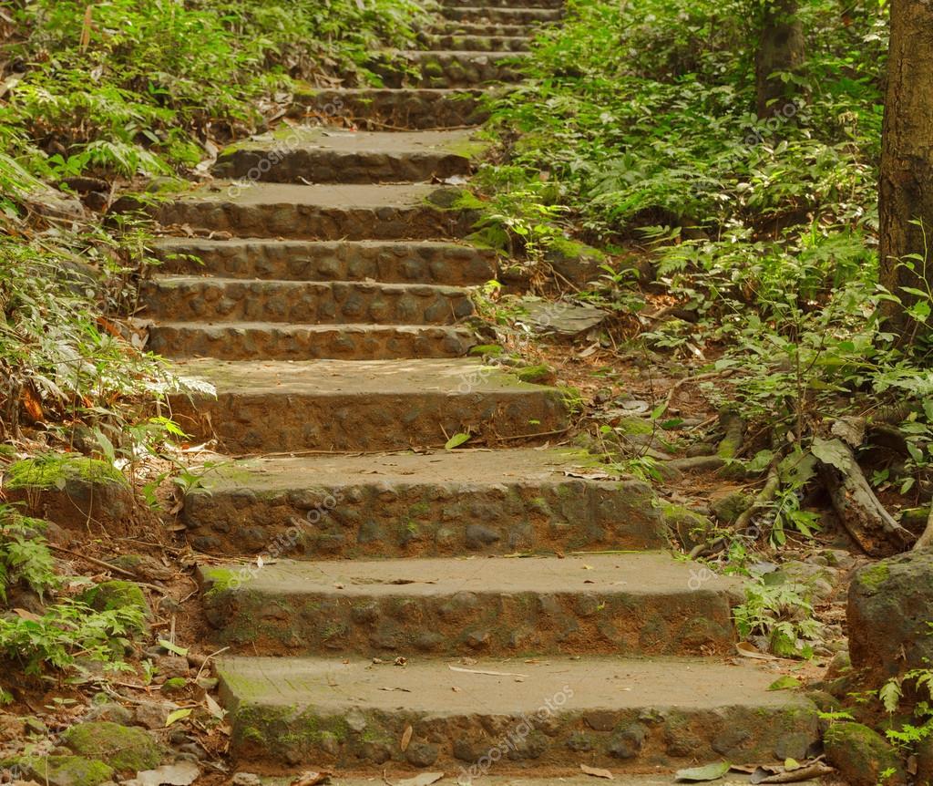 Escaleras de piedra en un bosque foto de stock - Escaleras de piedra ...
