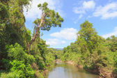 River in forest with blue sky, Khao Yai, Thailand — Stock Photo