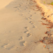 Footsteps on the beach — Stock Photo