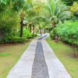 The path in the garden — Stock Photo