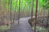Wooden Bridge In Mangrove Forest — Stock Photo