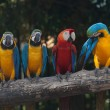Colorful Macaw — Stock Photo #38542081