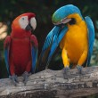 Colorful Macaw — Stock Photo #38542101