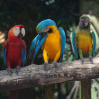 Colorful Macaw — Stock Photo #38542107