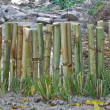 Stock Photo: Bamboo fence