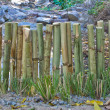 Bamboo fence — Stock Photo #38547955